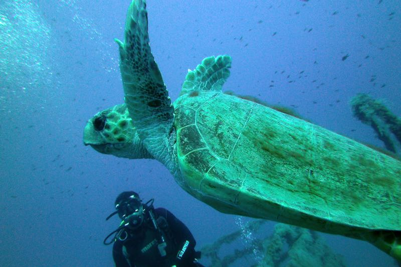 Scuba diving with turtle in the blue cyprus sea